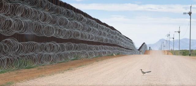 2 место в категории «Природа», 2020. Калифорнийская земляная кукушка у пограничной стены, разделяющей США и Мексику в Аризоне. Автор Алехандро Прието
