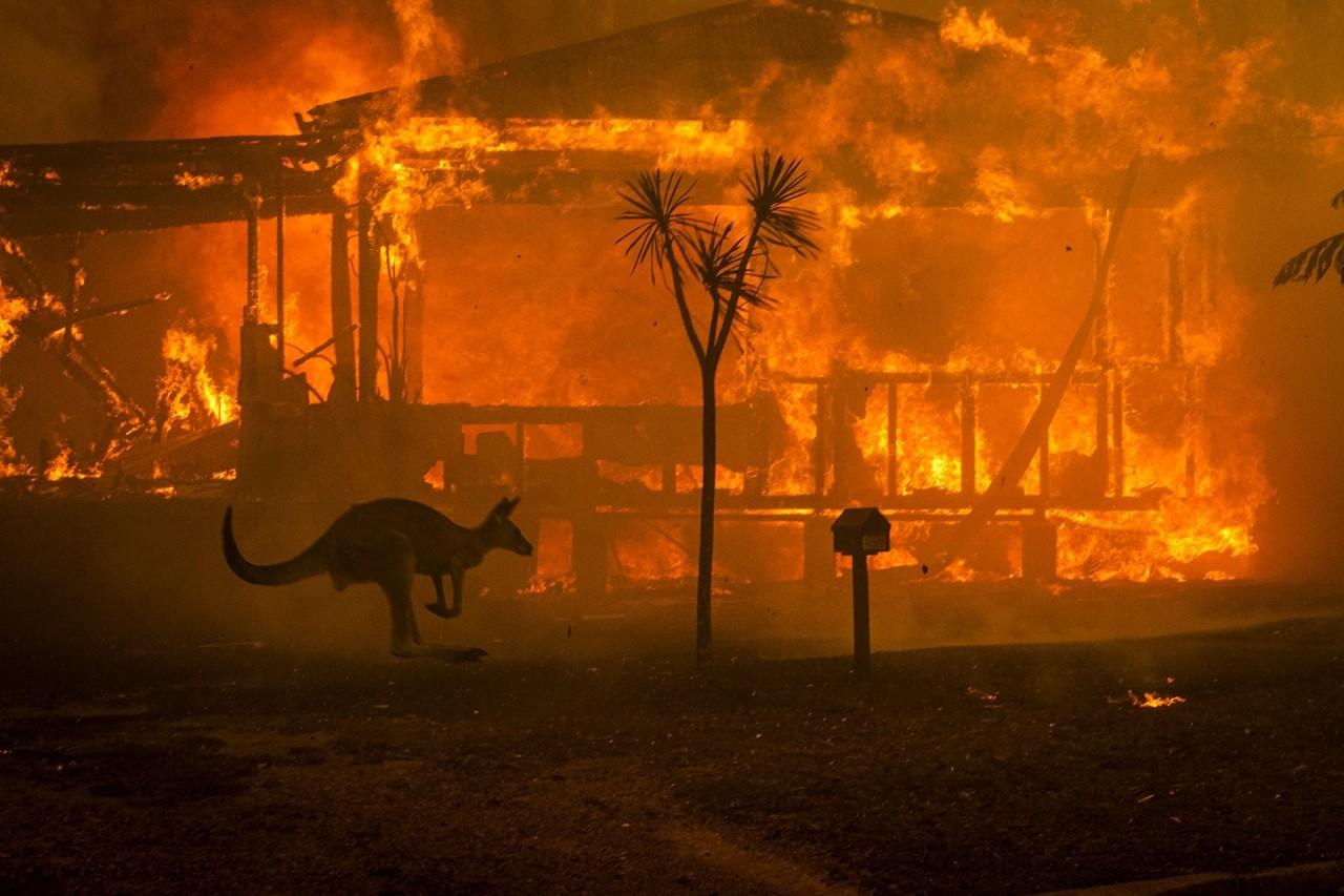 2 место в категории «Срочные новости», фотосерии, 2020. Кенгуру пытается спастись от лесного пожара возле горящего дома в Новом Южном Уэльсе, Австралия. Автор Мэтью Эбботт