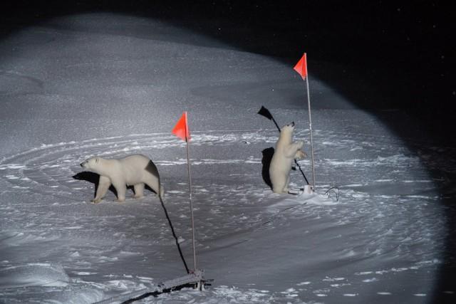 1 место в категории «Окружающая среда», 2020. Белая медведица с детёнышем возле оборудования, установленного учёными с ледокола «Поларштерн» в Северном Ледовитом океане. Автор Эстер Хорват