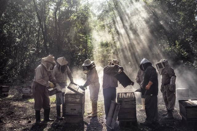 2 место в категории «Окружающая среда», 2019. «Боги мёда». Автор Надя Шира Коэн