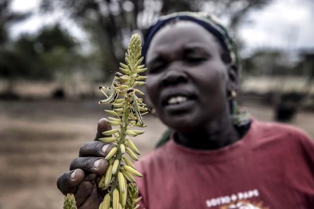 3 место в категории «Природа», серия, 2021. Нашествие саранчи на ферме в округе Туркана, Кения. Автор Луис Тато