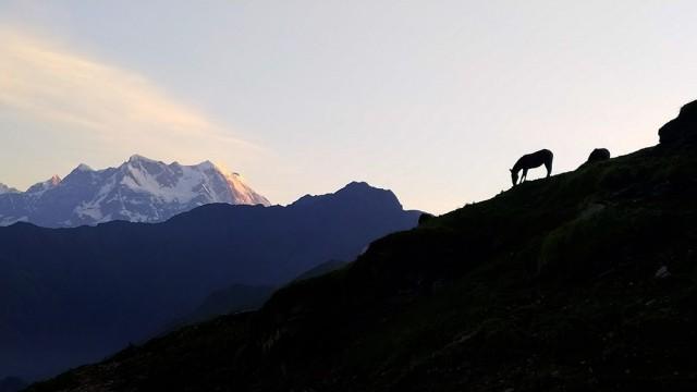 Поощрительная премия в категории «Природа и дикие животные», 2020. «Лошадь и Гималаи». Автор Санджив Кумар