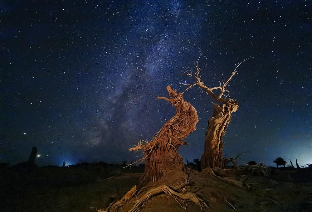 Из портфолио главного победителя Mobile Photography Awards 2020. Дерево под небом. Автор Дэн Лю