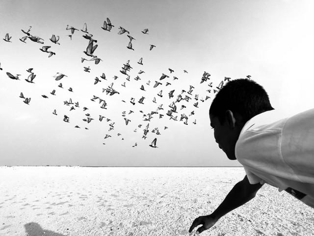 Победитель в категории «Чёрно-белое фото». «Мы бежим, а вы летите». Автор Димпи Бхалотия