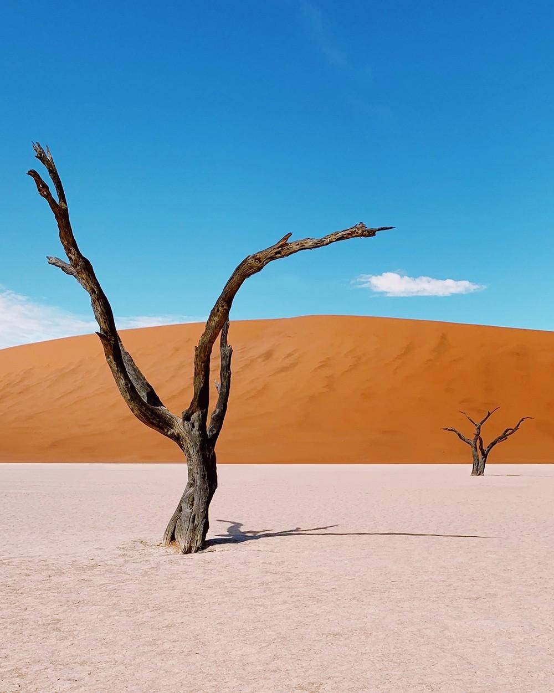 Поощрительная премия в категории «Природа и дикие животные», 2019. «Дедвлей – африканское кладбище деревьев». Автор Даниэль Хейлиг