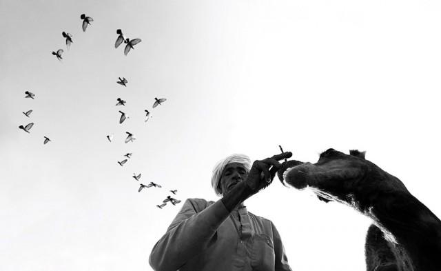 Поощрительная премия в категории «Чёрно-белое фото». «Птицы за плечами». Автор Димпи Бхалотия