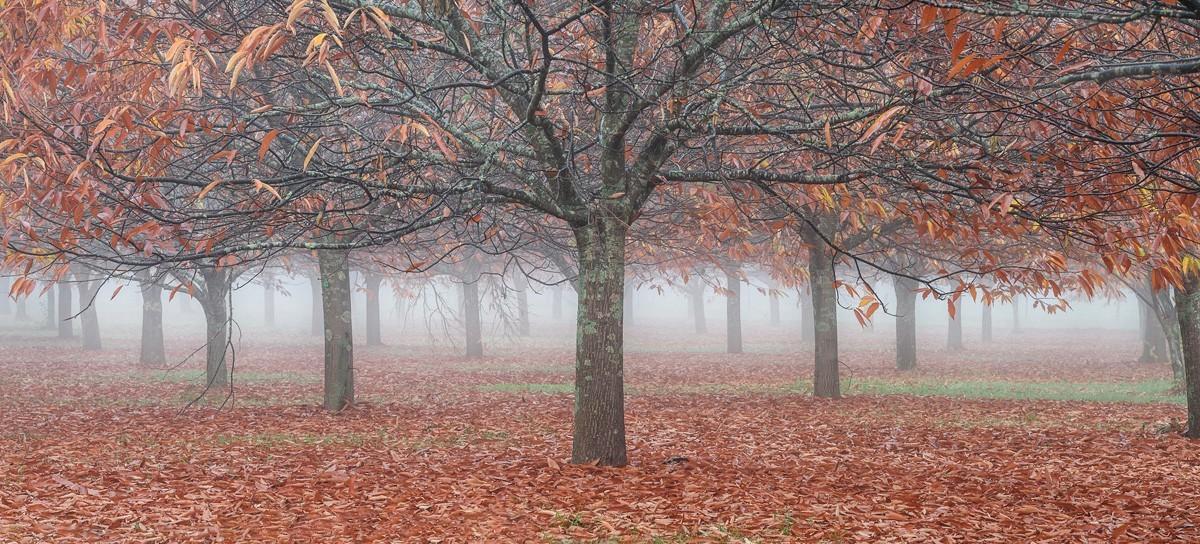 Финалист, 2020. Деревья в золоте, Австралия. Автор Мике Бойнтон