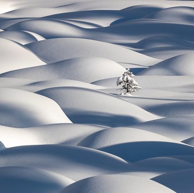 Финалист, 2020. «Дерево, одетое в белое». Канадские Скалистые горы. Автор Викки Маклауд