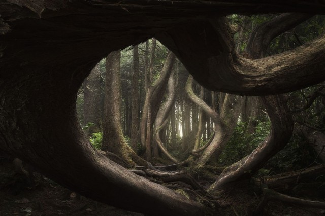 Главный победитель International Landscape Photographer of the Year 2018. «Извивающийся лес». Автор Адам Гиббс