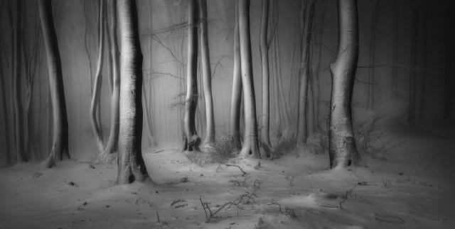 Лауреат премии в категории «Снег и лёд», 2019. Национальный парк «Центральный Балкан», Болгария. Автор Веселин Атанасов