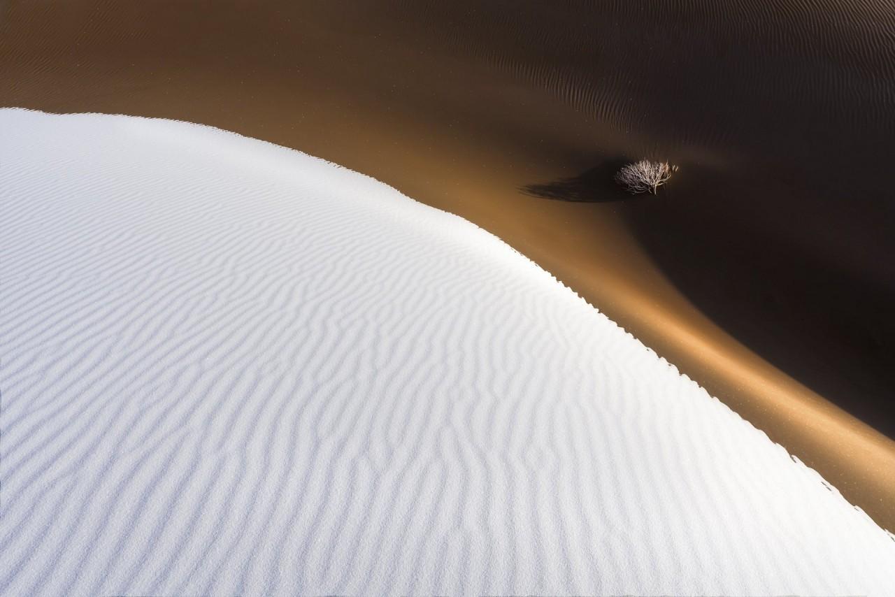 2 место в номинации «Пейзажный фотограф года» 2019. Дерево в пустыне. Автор Ян Гуан