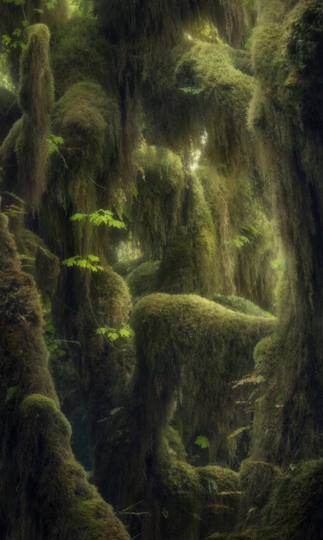 3 место в номинации «Пейзажный фотограф года» 2019. Тропический лес. Автор Блейк Рэндалл
