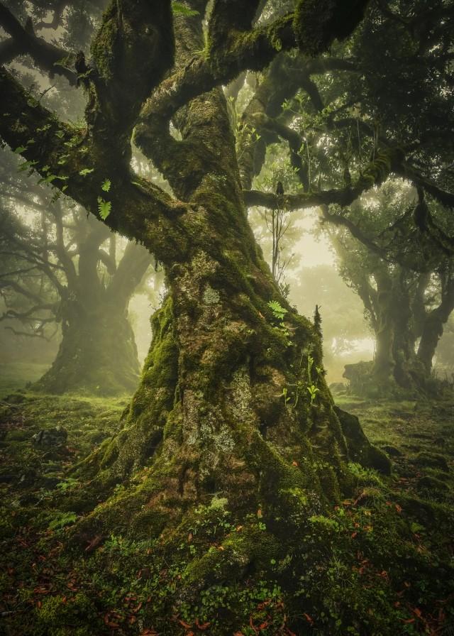Лауреат премии в категории «Одинокое дерево», 2019. Автор Анке Бутавич