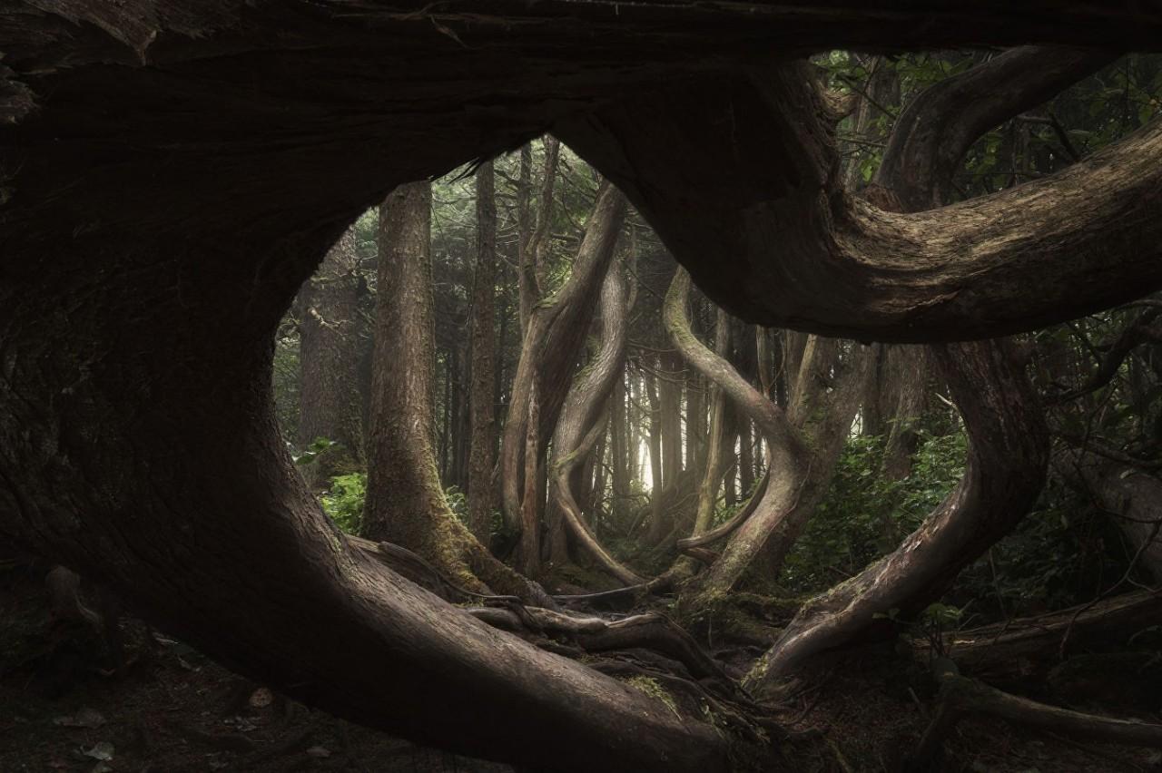 Восхищение природой в конкурсе «Международный пейзажный фотограф года»