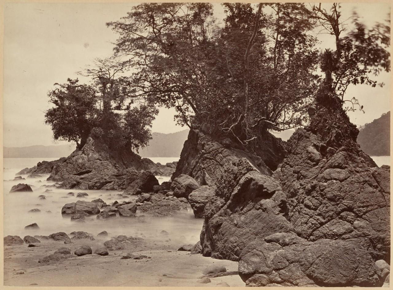Тропический пейзаж, залив Лайм, отлив, 1871. Автор Джон Моран