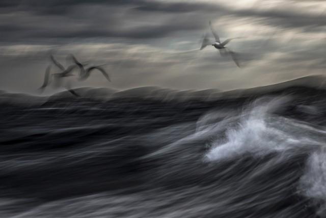 2 место в категории «Птицы», 2020. «Беспокойное море». Автор Иржи Гржебичек