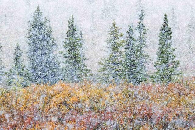 Поощрительная премия в категории «Искусство природы», 2020. Первый снег в сентябре, Аляска. Автор Алессандро Карбони