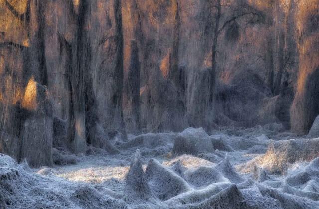 1 место в категории «Пейзаж», 2020. «Заколдованный лес». Земля, покрытая инеем. Автор Станислао Базилео