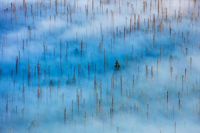 1 место в категории «Растения и грибы», 2020. «Мёртвый лес». Национальный парк Баварский Лес, Германия. Автор Радомир Якубовски