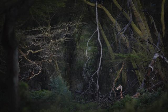 Главный победитель Nature Photographer of the Year и 1 место в категории «Млекопитающие», 2020. «Парк Юрского периода». Национальный парк Озеро Накуру, Кения. Автор Роберто Марчегиани