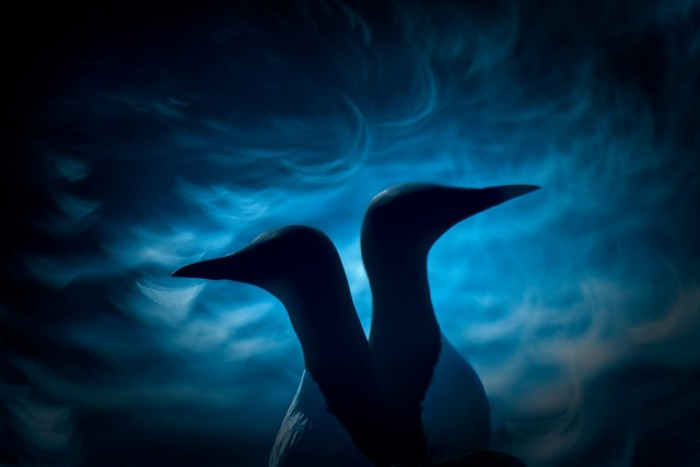 2 место в категории «Птицы». Разногласие. Автор Фрэнсис Де Андрес Де Мигель
