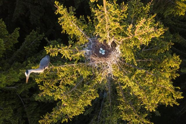 Финалист в категории «Россия с высоты птичьего полета», 2020. Цапля и гнездо. Автор Дмитрий Вилюнов