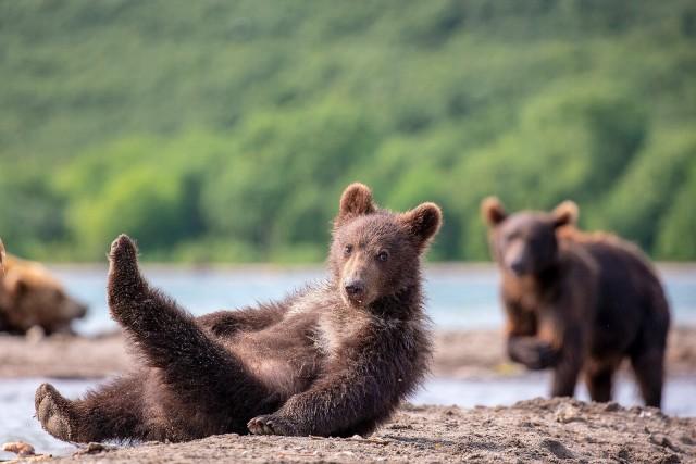 Финалист в категории «Эти забавные животные», 2020. Утренняя гимнастика. Автор Константин Шатенев