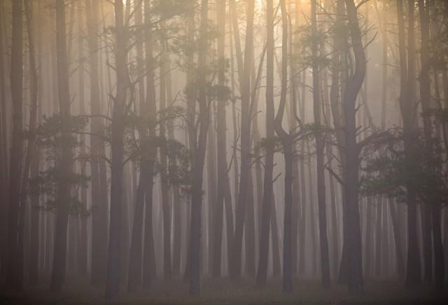 Номинация «Пейзаж», 2020. Осеннее солнце. Липецкий район, Липецкая область. Автор Максим Портнов