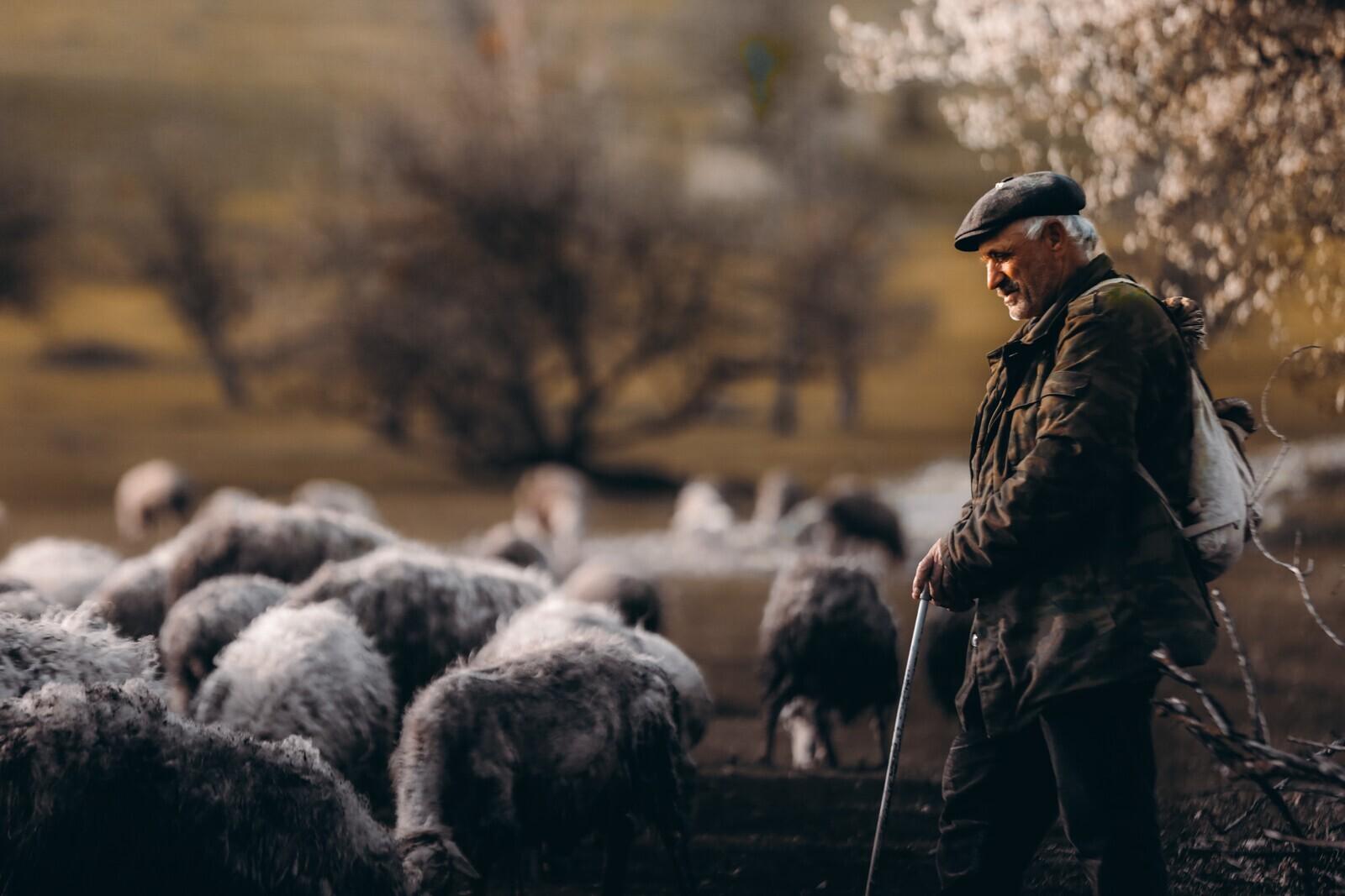 Финалист в номинации «Многоликая Россия», 2021. «Мысли пастуха». Автор Заид Хамидов