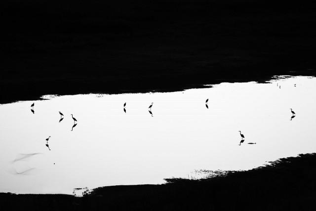Номинация «Птицы», 2019. «В сумерках». Липецкая область. Автор Юрий Сорокин