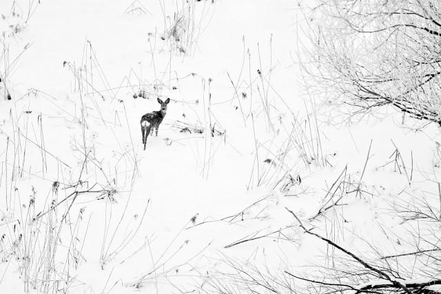 Финалист в категории «Дикие животные», 2019. «Зимы ждала, ждала природа». Автор Евгений Мазурин
