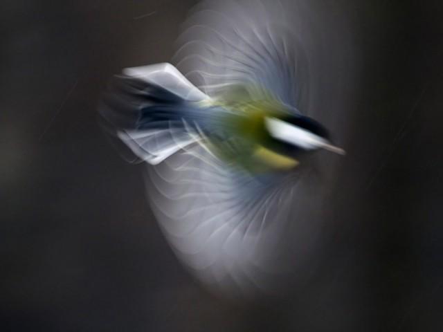 Финалист в категории «Искусство дикой природы (арт-фото)», 2019. «Ротор». Автор Виктор Тяхт