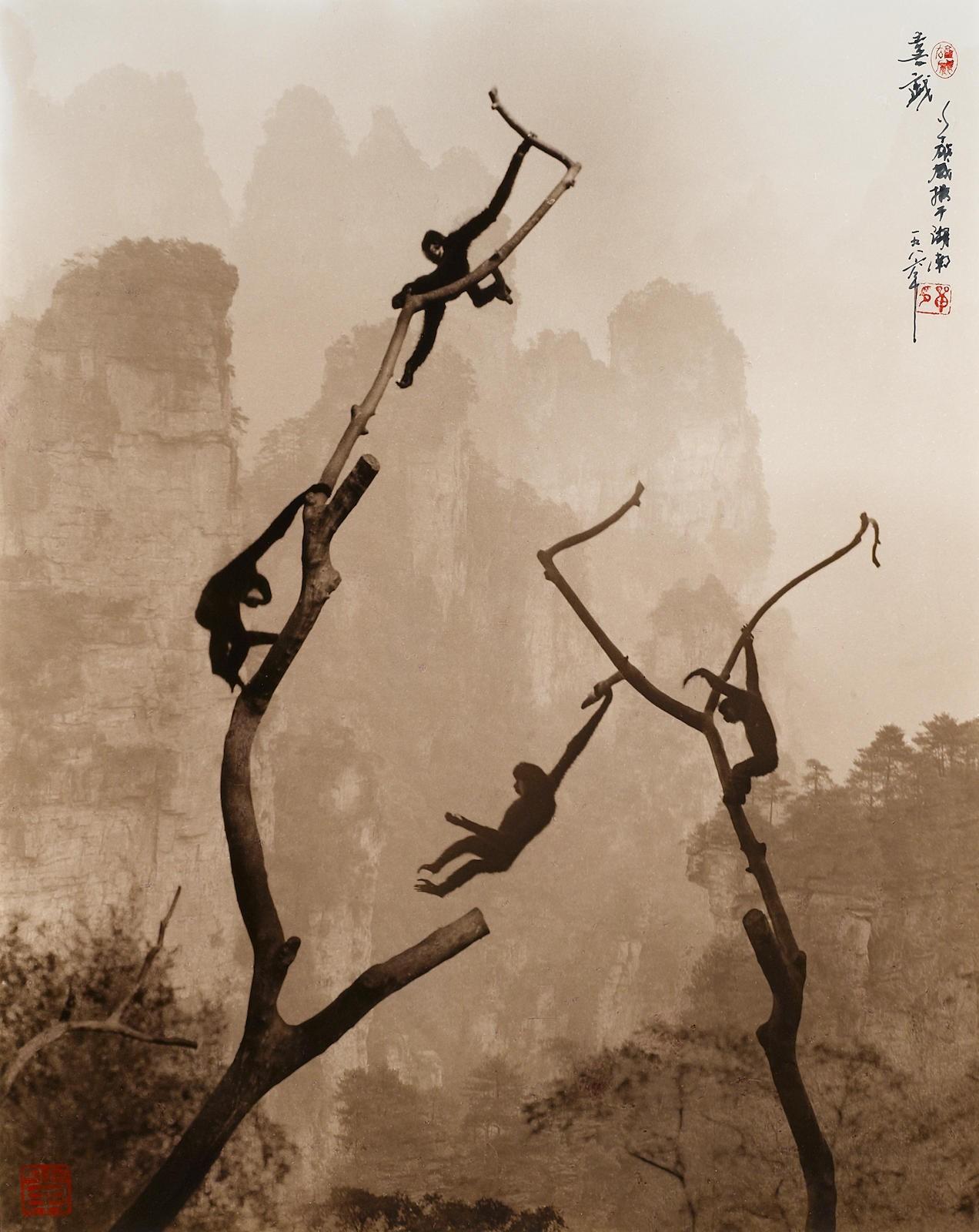 Игривые гиббоны в горах Тяньцзи, 1986. Автор Дон Хонг-Оай
