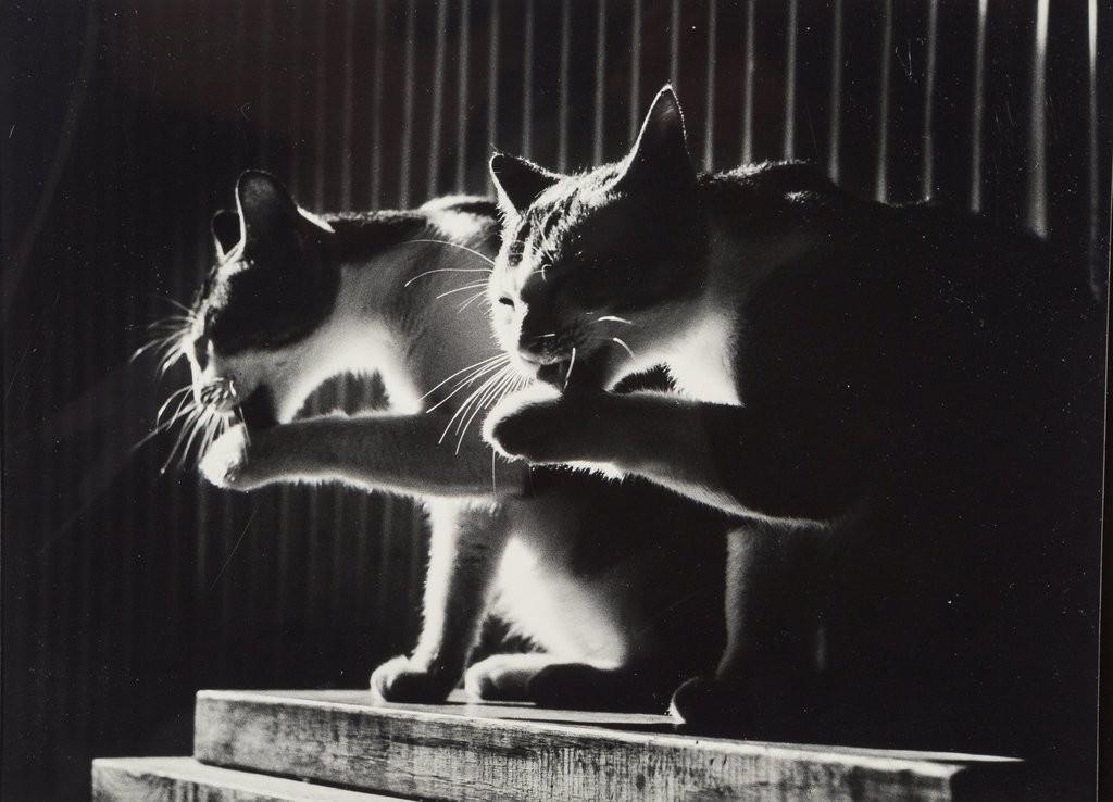 Коты, 1984. Автор Дон Хонг-Оай