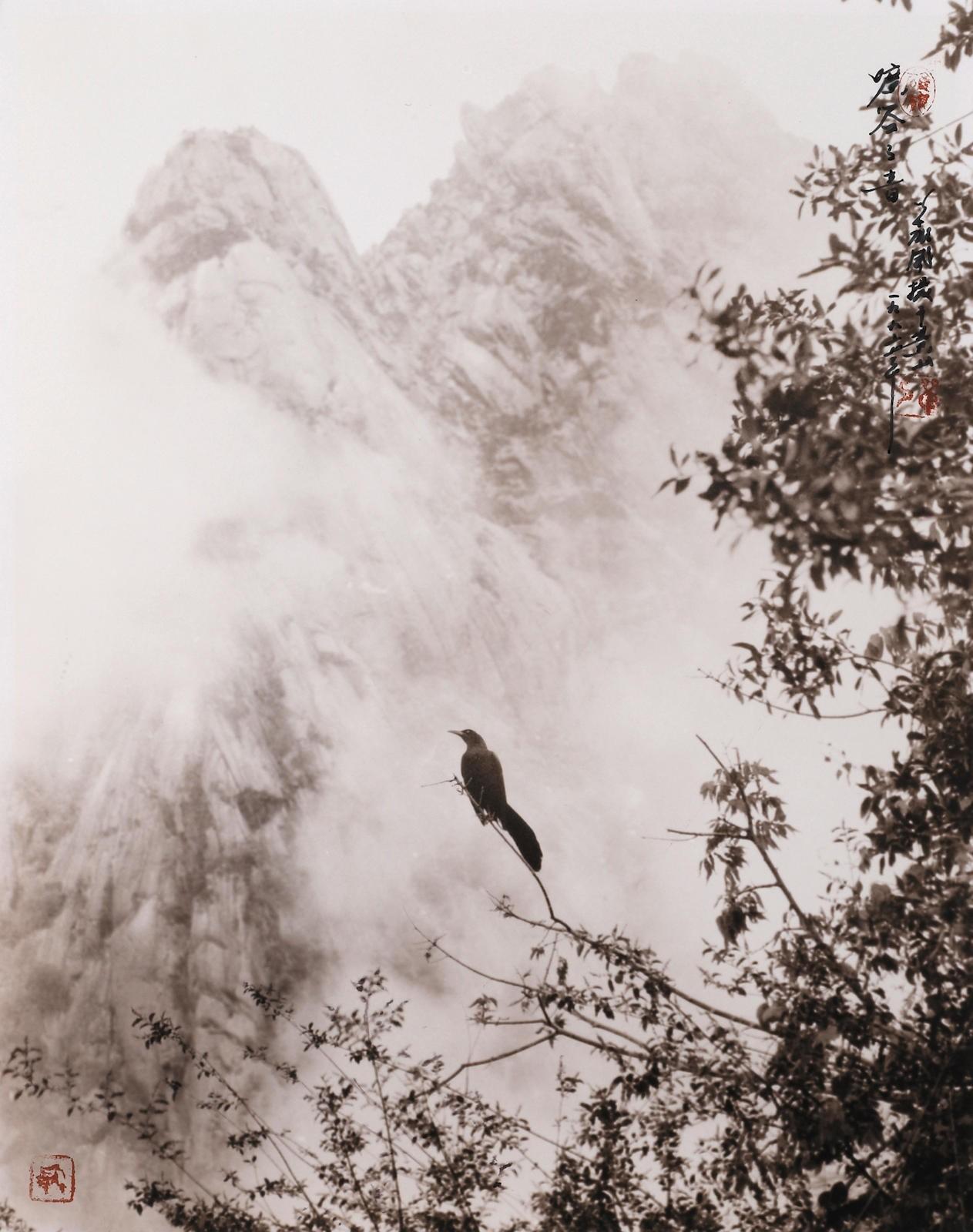 Птица на дереве в горах. Автор Дон Хонг-Оай