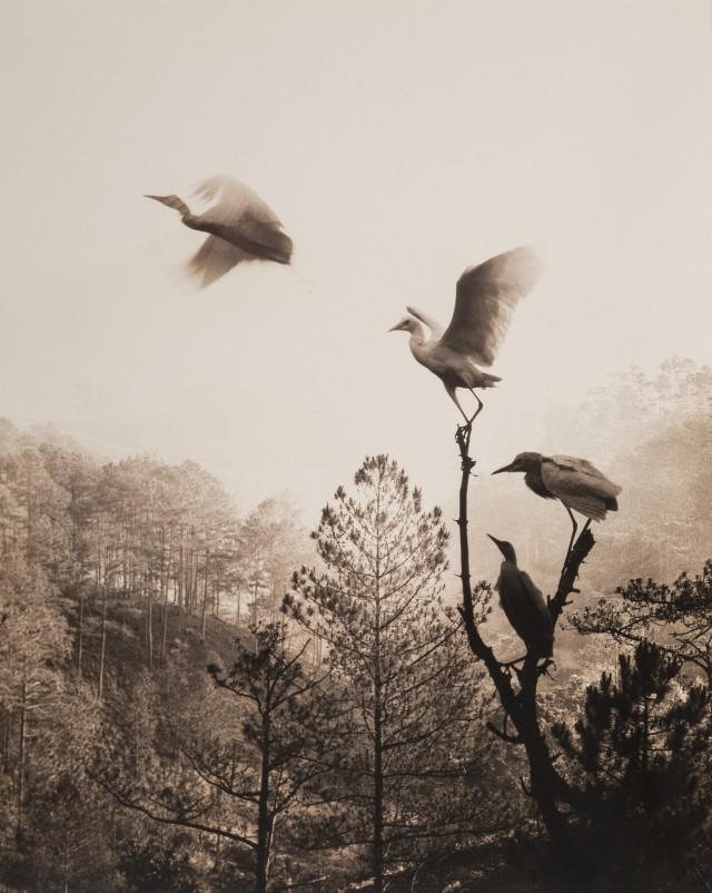 Птицы в полёте, 1984. Автор Дон Хонг-Оай
