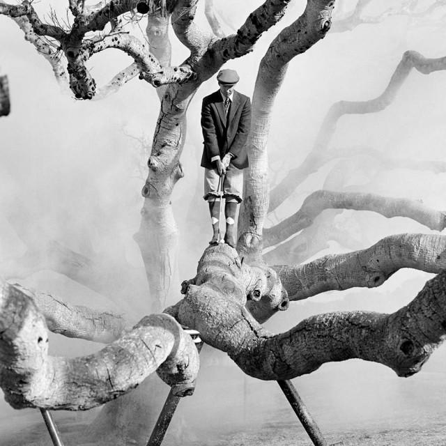 Дэниел на дереве в тумане, Пеббл-Бич, Калифорния, 1998. Автор Родни Смит