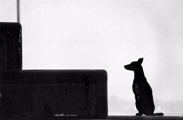 Собачий силуэт. Варанаси, Индия. Автор Уолтер Ротуэлл