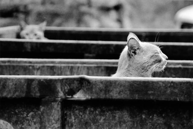 «Каирские коты». Автор Уолтер Ротуэлл (2)