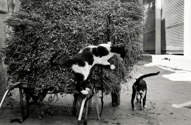 «Каирские коты». Автор Уолтер Ротуэлл (4)