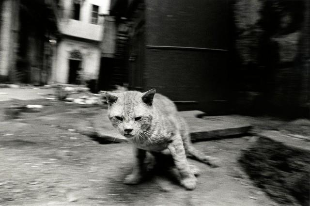 «Каирские коты». Автор Уолтер Ротуэлл (6)