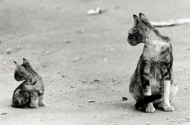 «Каирские коты». Автор Уолтер Ротуэлл (7)