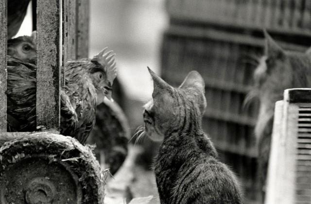«Каирские коты». Автор Уолтер Ротуэлл (9)