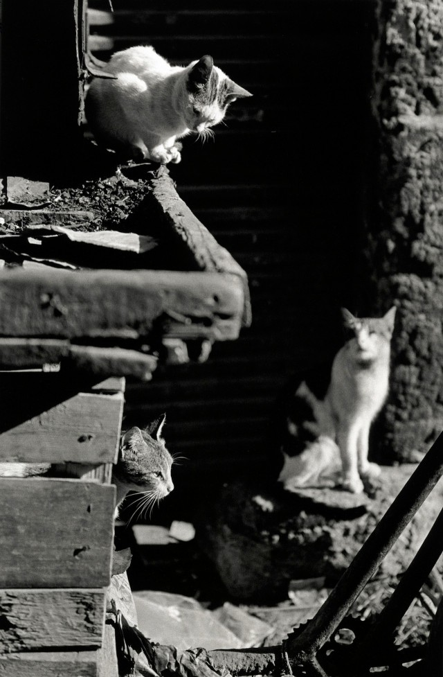 «Каирские коты». Автор Уолтер Ротуэлл (10)
