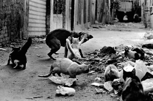 «Каирские коты». Автор Уолтер Ротуэлл (11)