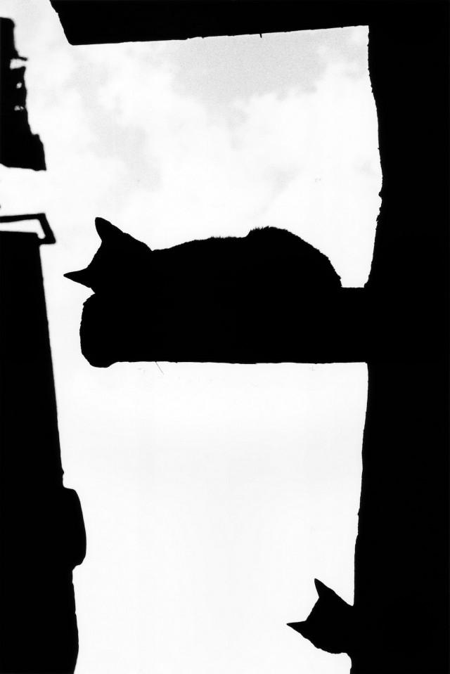 «Каирские коты». Автор Уолтер Ротуэлл (13)