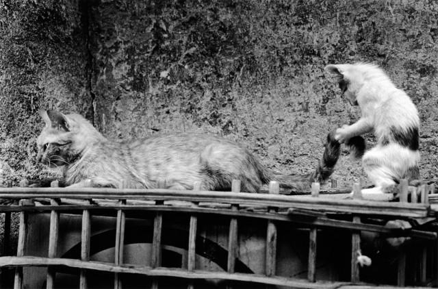 «Каирские коты». Автор Уолтер Ротуэлл (14)
