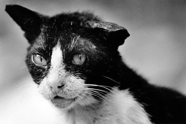 «Каирские коты». Автор Уолтер Ротуэлл (15)
