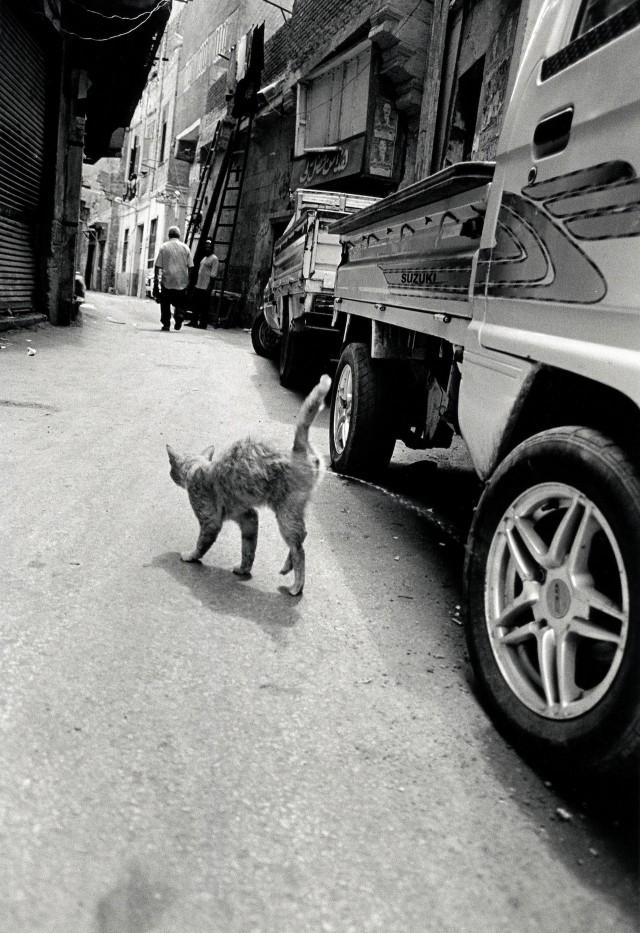 «Каирские коты». Автор Уолтер Ротуэлл (16)