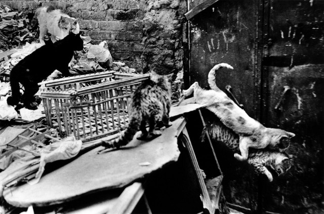 «Каирские коты». Автор Уолтер Ротуэлл (17)